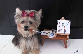 Amazing Cute Dog Tricks with Yorkie ...