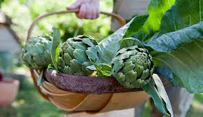 Growing Artichokes Learn How To Plant Grow Care For