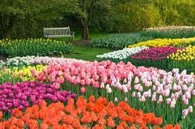 garden bulbs. The Idea Garden Display In Bloom. Photo By Larry Albee. Bulbs L