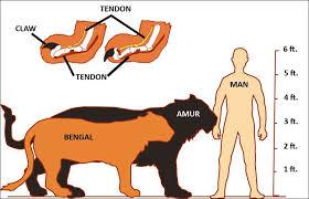 The Siberian Amur Tiger Panthera Tigris Altaica A Chart