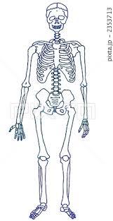 「骸骨標本無料イラスト」の画像検索結果
