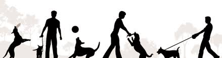 Image result for pet training