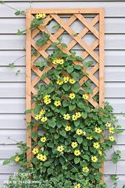 20 Best Climbing Plants Images On Pinterest | Gardening, Plants ...