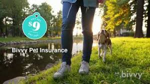 You cannot register for a new personal tax account to view your national insurance number or print the confirmation letter. Bivvy Tv Commercial A New Breed Of Pet Insurance Ispot Tv