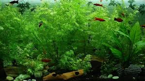 LED Beleuchtung, Tageslichtsimulation Im Aquarium