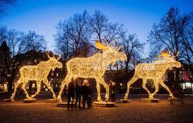Moose Christmas Lights 28 Moose Christmas Lights Moose W Christmas Lights