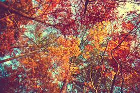 cute fall desktop backgrounds. Perfect Desktop Autumn Leaves Wallpaper By Venomxbaby  To Cute Fall Desktop Backgrounds L