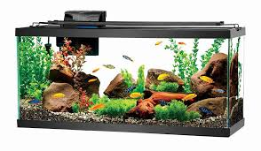 Fish Compatibility How To Build A Peaceful Community Fish Tank