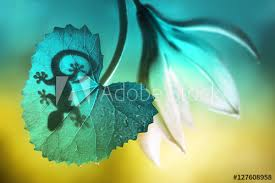 summer outdoors wallpaper. Lizard Shadow On Green Sheet Close-up Macro. And A Flower Summer Outdoors Wallpaper