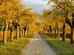 Free Images tree nature path outdoor road countryside