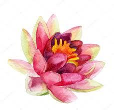 лотос тату акварель цветок лотоса акварель стоковое фото