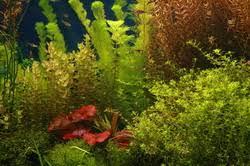 Удобряем аквариум