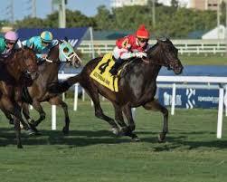 Drf Com Pdf Charts Instilled Regard Breaks Through In Fort Lauderdale Stakes