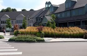 Tall Decorative Grass Ornamental Grasses Great For Landscape