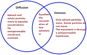 Venn Diagram Of Diffusion Osmosis And Active Transport Yr9 Topic 3 Cellular Movement Amazing World Of Science