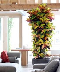 tall office plants. the 25 best tall indoor plants ideas on pinterest lounge seating and for office r