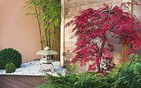 10 best trees for small gardens