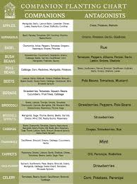 Kale Companion Planting Chart Companions Or Antagonists A Complete Guide To Companion