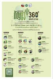 สสจ.บุรีรัมย์ พร้อมจัดสัมมนา กัญชากัญชง 360 องศา เพื่อประชาชน-1