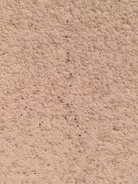 20 plus termite holes in the ceiling yelp