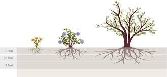 Tree Root Depth Chart Plant Watering Guide Water Use It Wisely
