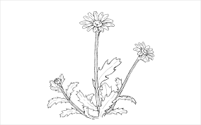植物のイラストの描き方 ネクストページブログ