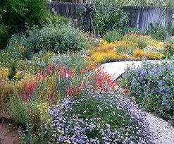 California Landscape Plants Native For The Garden 3  Tips Northern Canadiantruckfest.com