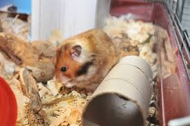 best bedding for hamsters high quality