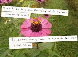 Flower Quotes Cool Flower Quotes Jenny's Serendipity Art Blog