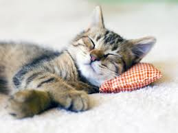 """Résultat de recherche d'images pour """"chat dormant"""""""