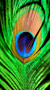 peacock wallpaper for mobile. Contemporary Peacock Iphone 6 Wallpaper Backgrounds Hd Phone Wallpapers Wallpapers For Mobile  Phones Cellphone To Peacock T