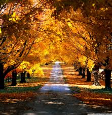 25++ Autumn Wallpaper Hd For Android ...