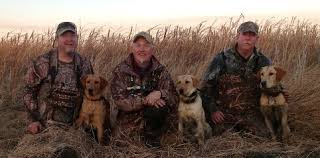 chocolate lab pheasant hunting. Simple Chocolate Duck Hunting Pheasant Pointing Labu0027sHunt Testsfield Trials Near  Chicago IL Plymouth IN Central With Chocolate Lab Pheasant Hunting N