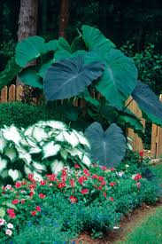 Caladiums and elephant ears! Love the Elephant ears. I like this layout and  those