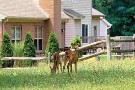 white speckled fawns and deer in your garden
