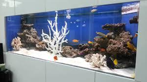 Fun Fish Tank Decorations Are Aquarium Chillers Necessary Grihoncom Ac Coolers Devices