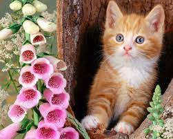 Cute Animals Wallpapers Free Download ...