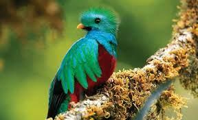 Top Ten Birding Destinations in Costa Rica + Must-See Birds