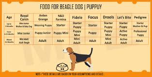 Beagle Price In India How Much Does They Cost Why