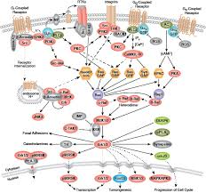Gpcr Signaling G Protein Coupled Receptors Signaling To Mapk Erk Cell