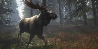 Moose Thehunter Call Of The Wild Wiki Fandom