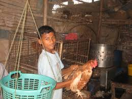 child is working at poultry firms child labour child is working at poultry firms