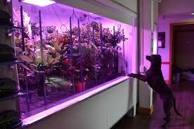 Best Led Grow Light For Peppers 2015 Led Gardening Indoor Garden Plants Black Dog Led