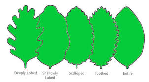 Ohio Leaf Identification Chart Wildflower Identification