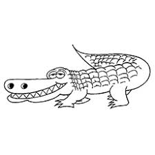 Small Picture Top 25 Free Printable Alligator Coloring Pages Online