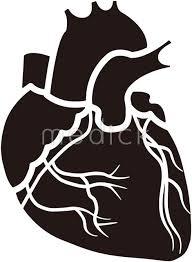 心臓のイラスト 医療のイラスト写真動画素材販売サイトの