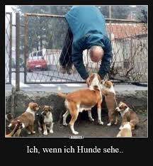 Ich Wenn Ich Hunde Sehe Lustige Bilder Sprüche Witze Echt