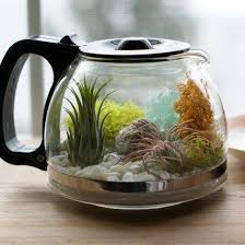 repurpose water garden inspiration