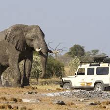 <b>African</b> Elephant Facts - Elephants For <b>Africa</b>