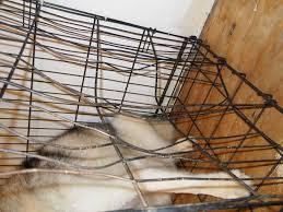 Image result for destroyed dog kennel
